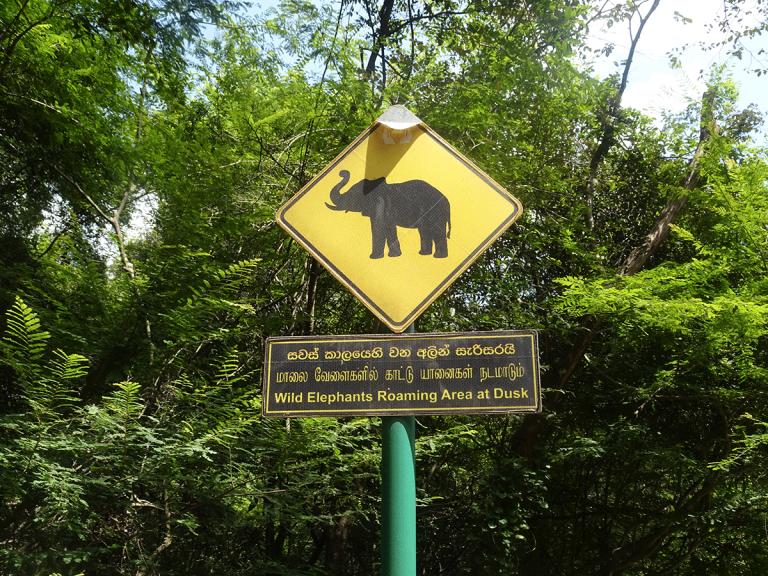 elephant-sigiriya
